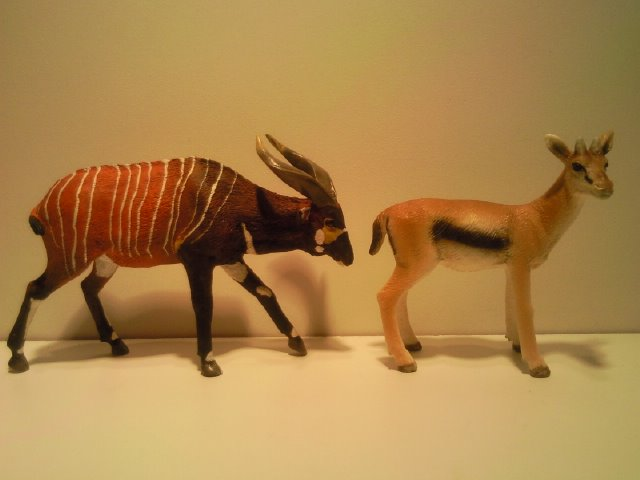 I am a member of the Ana Bongo club too now! Anas_Bongo_met_Schleich_Thompsons_Gazelle_1