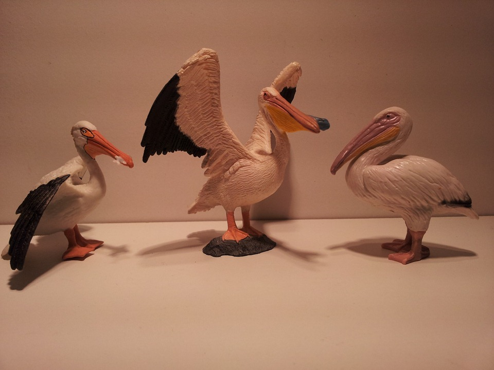Willy's Schleich additions...  - Page 9 Grote_Pelikanen_Juli_2012