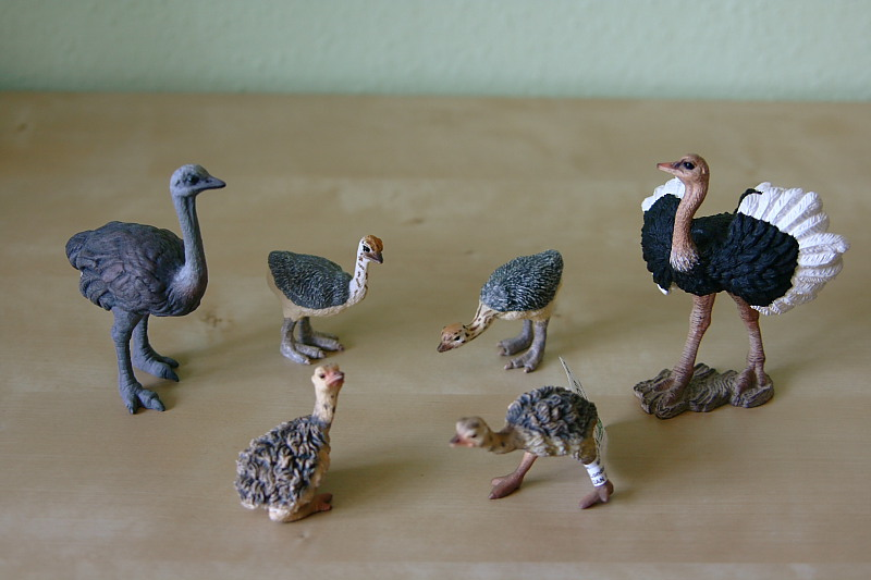 My new Collecta models 2012 IMG_4051_Ostrich_family