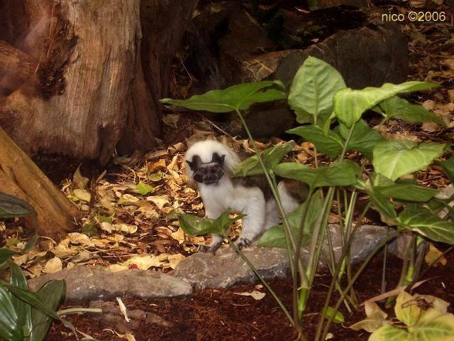 Nicove fotografije Majmunko