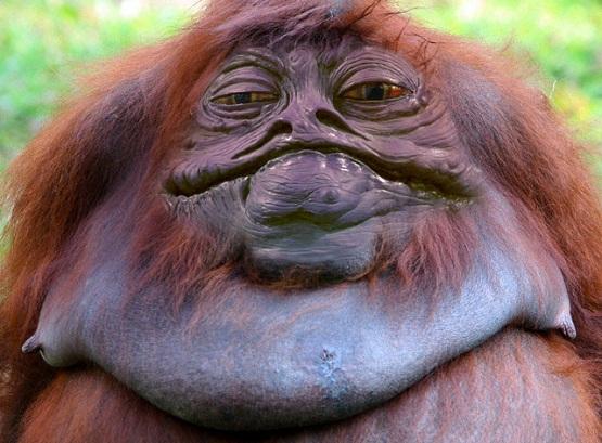Weird Things Jabba-the-Monkey-384