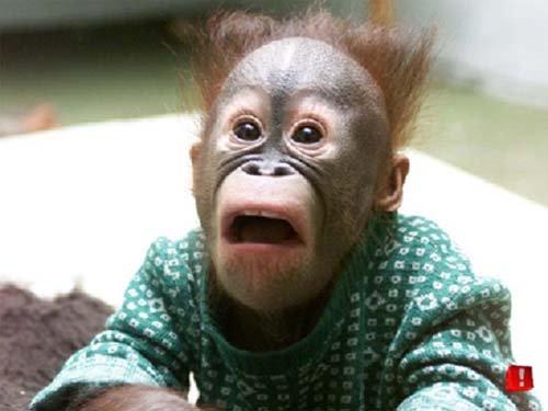 Pics engraçadas. - Página 2 Prasannash__Funny-MonkeyReaction-full