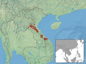 un animal -Ajonc - le 28 septembre trouvé par Suri Pseudoryx_nghetinhensis_distribution