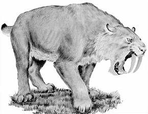 Le tigre à dents en sabre au cœur de l'Afrique ? Tigre_a_dents_de_sabre