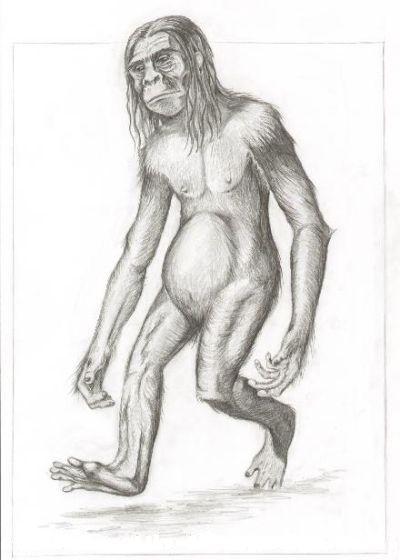 Les hommes-singes Orangp10
