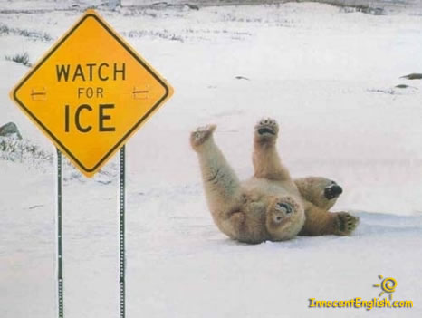 Putting an image into your post Funny-polar-bear-pic-img121