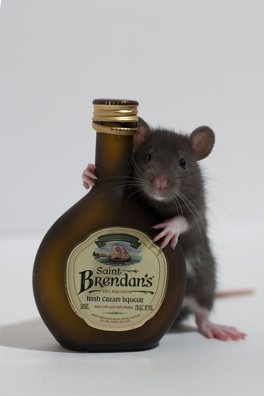 un animal par blucat trouvé par sylvie et  martin IrishRat
