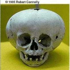 Etude sur prise de tête de nos ancêtres Crane4