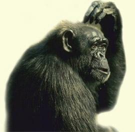 Cazzeggio!!! - Pagina 5 Uomo_scimmia