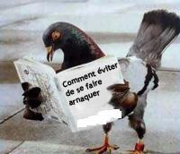 tarifs exorbitants Pigeon