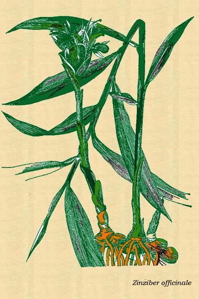 Plantas que curan.. Pj01