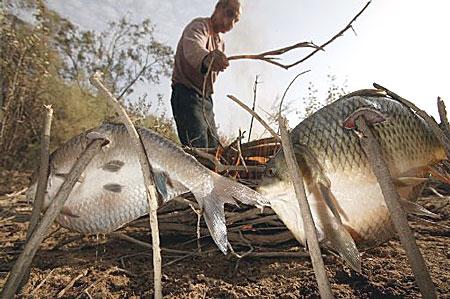 عمل السمك المسكوف العراقي  04fish