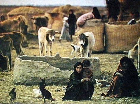 صور من التراث العراقي MARSHES_ISLAND