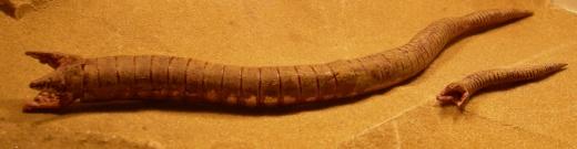 Dune à l'échelle 6mm WORMS