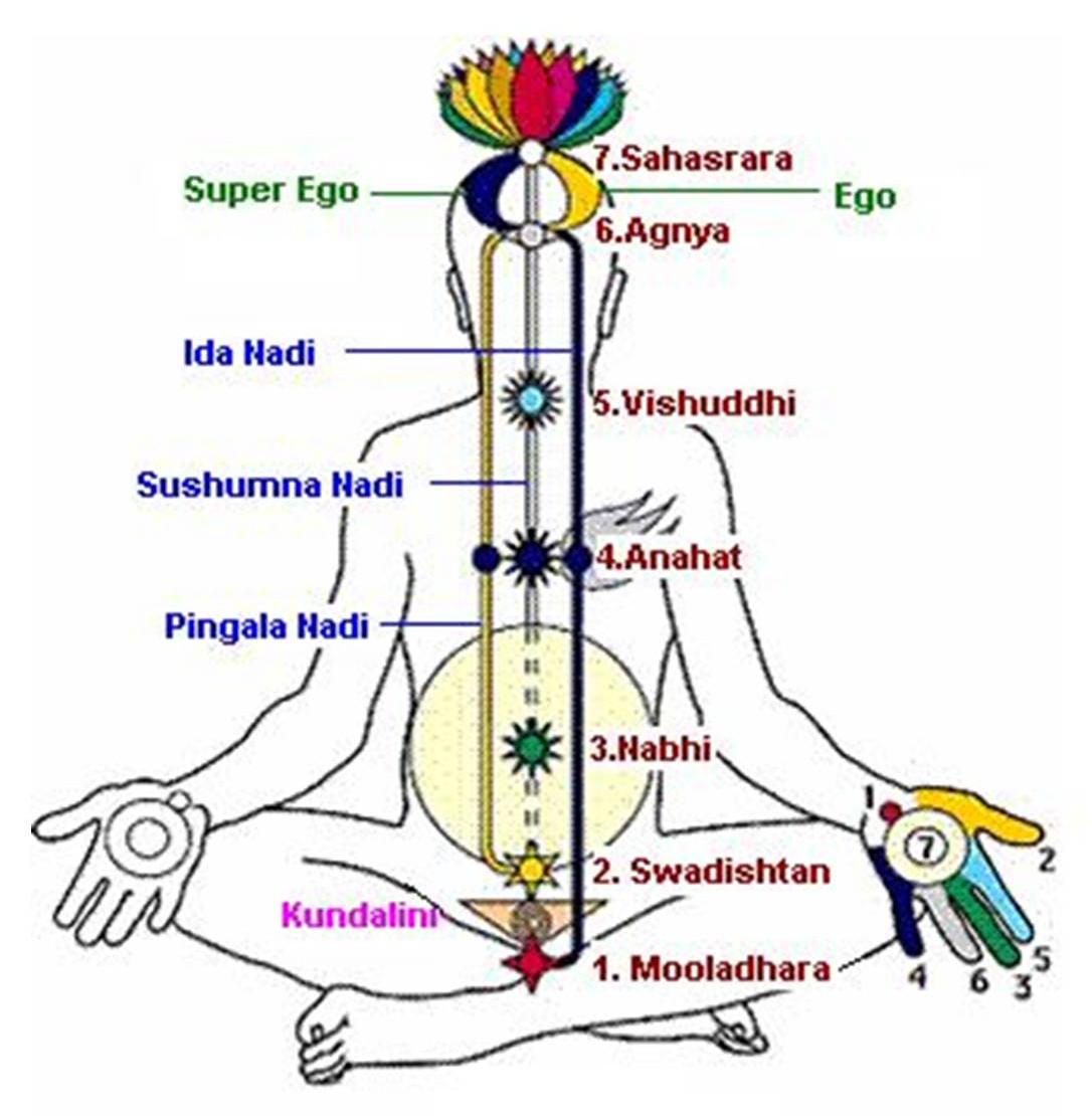 Практическая диагностика - Страница 5 Subtle-energy-body-Prana