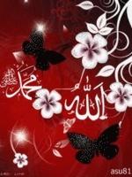 Nga Medreseja Allahm11