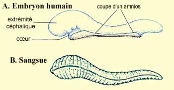 Ce que dit le Coran sur le développement embryonnaire humain The_Quran_on_Human_Embryonic_Development_002