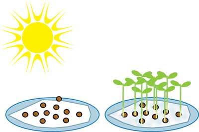 أهمية الماء في عملية التركيب الضوئي 003