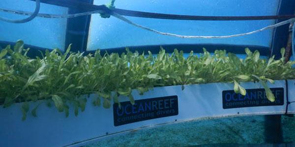 L'orto di Nemo Basilico-idroponica-nemo-w
