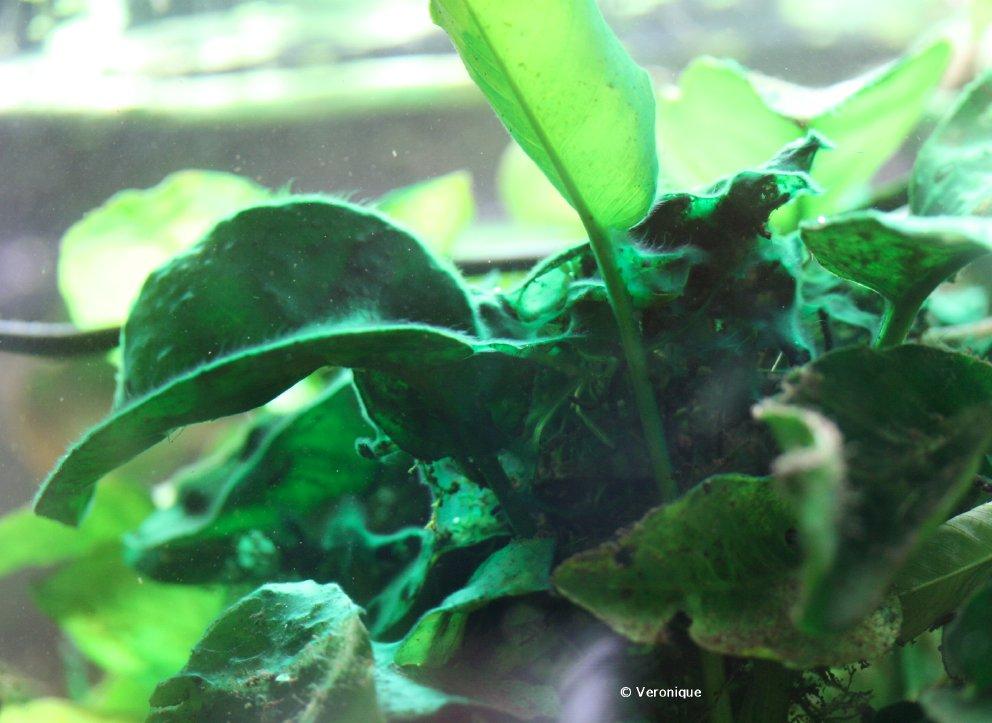 Algue très envahissante IMG_3183