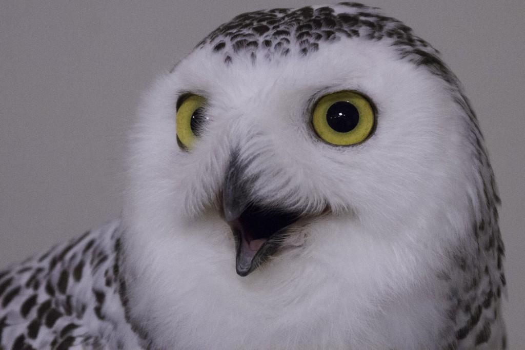 When a Hoo Hoos, you gotta Hoo Her Hoo [Paige] Owl-6-1024x683