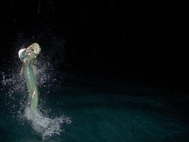 Pesca Nocturna con Mosca por José Manuel López Pinto 643_Night_Tarpon_March_2_2005