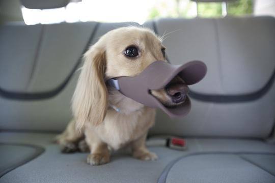 Mettre une muselière ou pas? - Page 6 Oppo-dog-muzzle-duck-bill-3