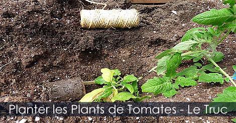 Planter et attacher ses plants de tomates - Étapes Planter-les-plants-de-tomates