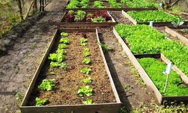 ¿Cómo cultivar frutas y hortalizas en macetas? 11