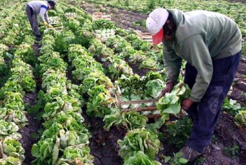 ¿Cómo cultivar frutas y hortalizas en macetas? 22