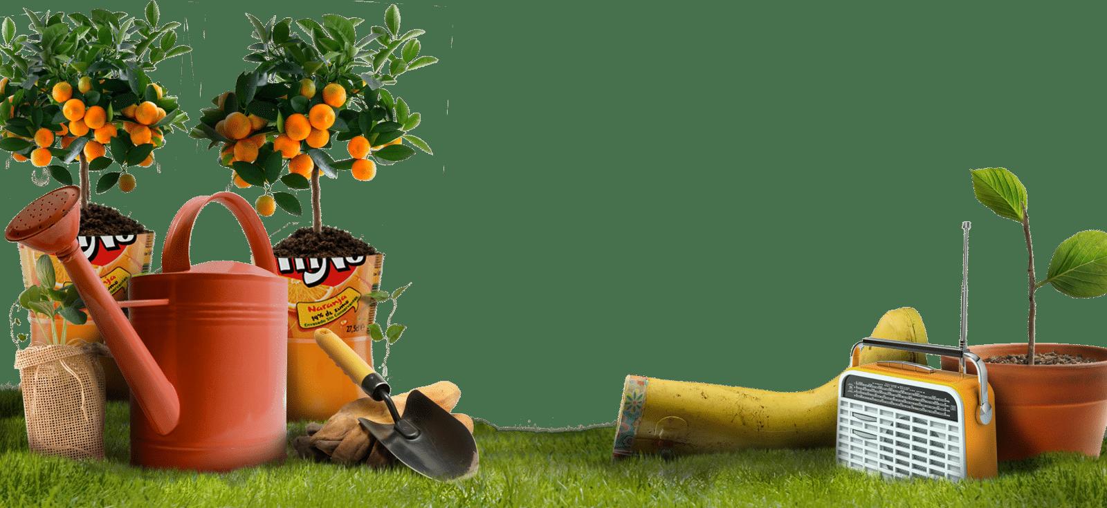 ¿Cómo cultivar frutas y hortalizas en macetas? 1