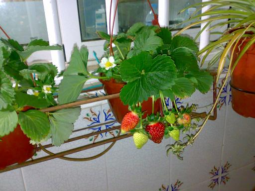 ¿Cómo cultivar frutas y hortalizas en macetas? 26