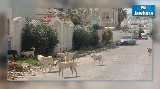 Monastir : 2175 citoyens victimes des chiens errants en 2015 Monastir-2175-citoyens-victimes-des-chiens-errants-en-2015