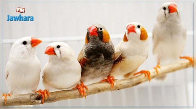 Grippe aviaire: Des oiseaux importés de France saisis à Monastir Grippe-aviaire-des-oiseaux-importes-de-france-saisis-a-monastir
