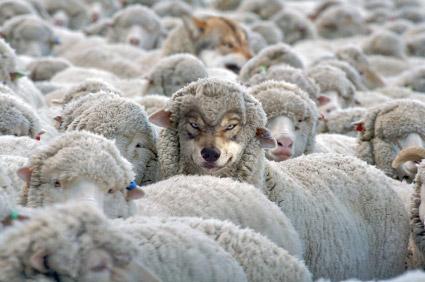 Asociación de imágenes  - Página 2 Lobo-oveja