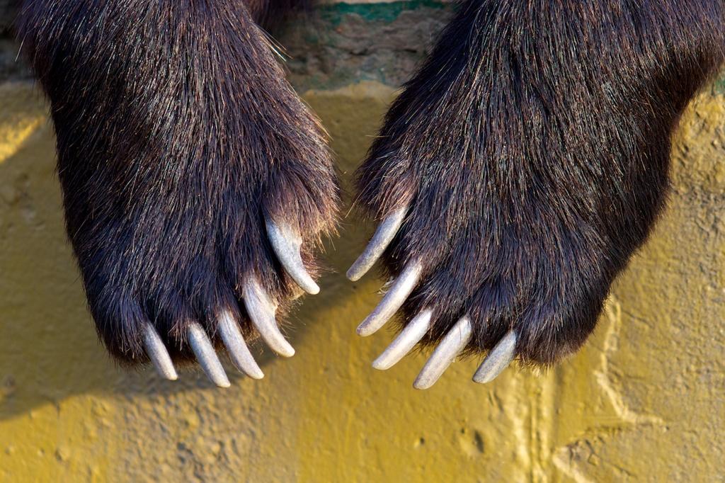 >> IMAGENES ENCADENADAS << - Página 2 Zoo-de-vigo-garras-de-oso