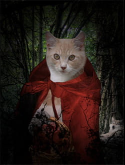 Pauvre chat-peron rouge de honte Portrait-chat-roux-726478