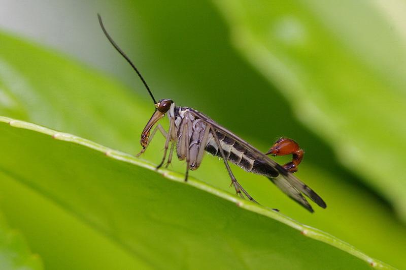 Curieux insectes de chez nous Panorbe0