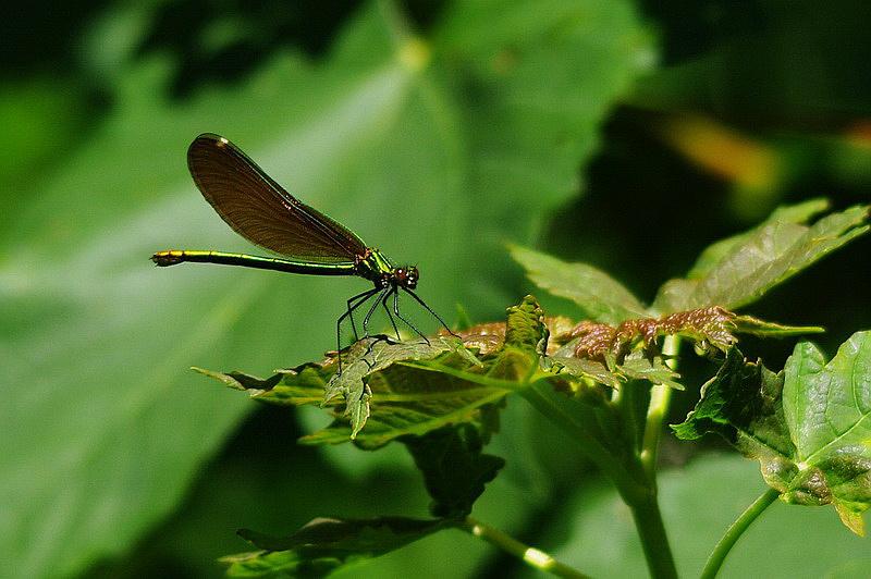 Curieux insectes de chez nous Agriondor