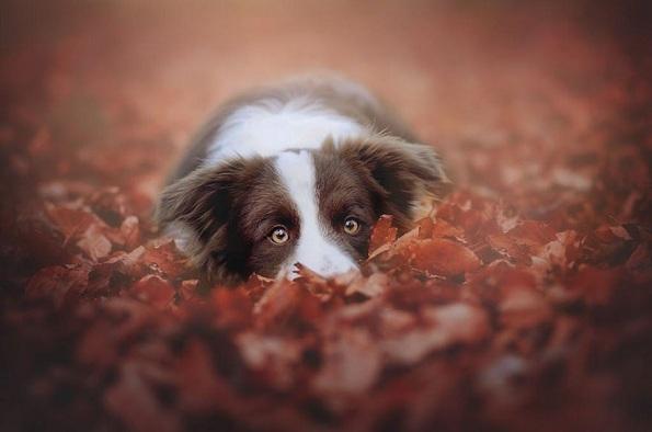 Кучиња - Page 6 10-uzhivanje-vo-esen-fotograf-pokazhuva-portreti-na-kuchinja
