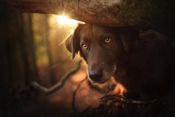 Кучиња - Page 6 8-uzhivanje-vo-esen-fotograf-pokazhuva-portreti-na-kuchinja