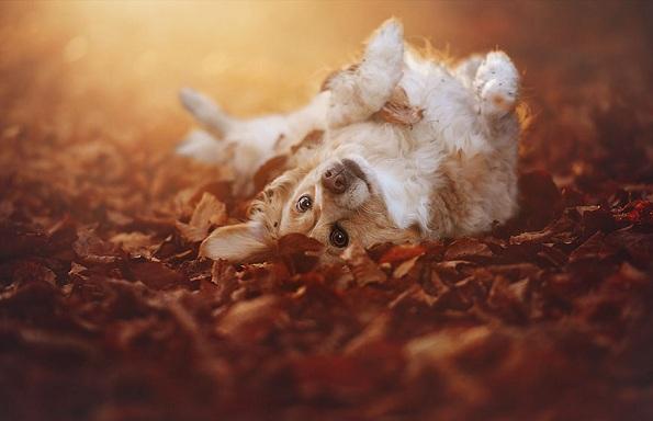 Кучиња - Page 6 9-uzhivanje-vo-esen-fotograf-pokazhuva-portreti-na-kuchinja