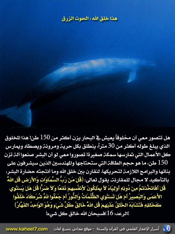 إنه مخلوق ضخم جداً يعتبر أكبر مخلوق على الأرض، إ Blue-hoot