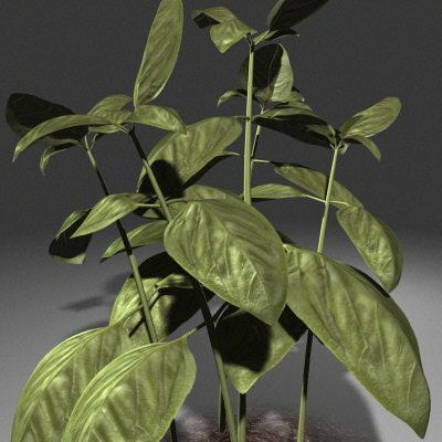 النبات يتألم .... سبحانك يا إلهي ما أعظمك Plant-21