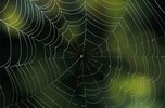 The spider and the atheist  Spider-web-00