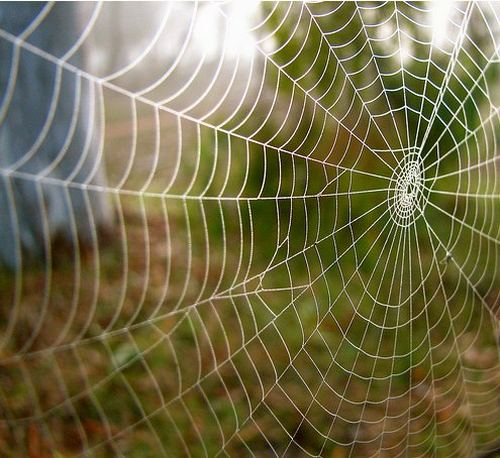The spider and the atheist  Spider-web-02