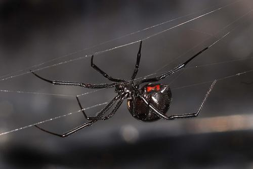 The spider and the atheist  Spider-web-05