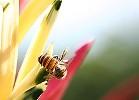 جهاز تكييف داخل النحلة؟؟!!! 161457052_ae6d2694e4_m