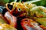 H καταναλωση ψαριων αποτρέπει την απώλεια μνήμης 41582555
