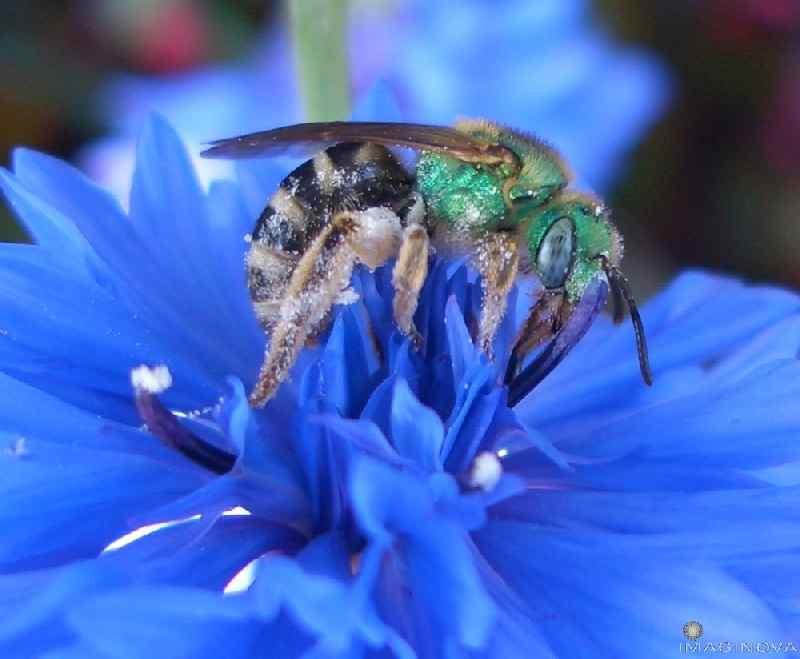 جهاز تكييف داخل النحلة؟؟!!! Bee%20on%20button